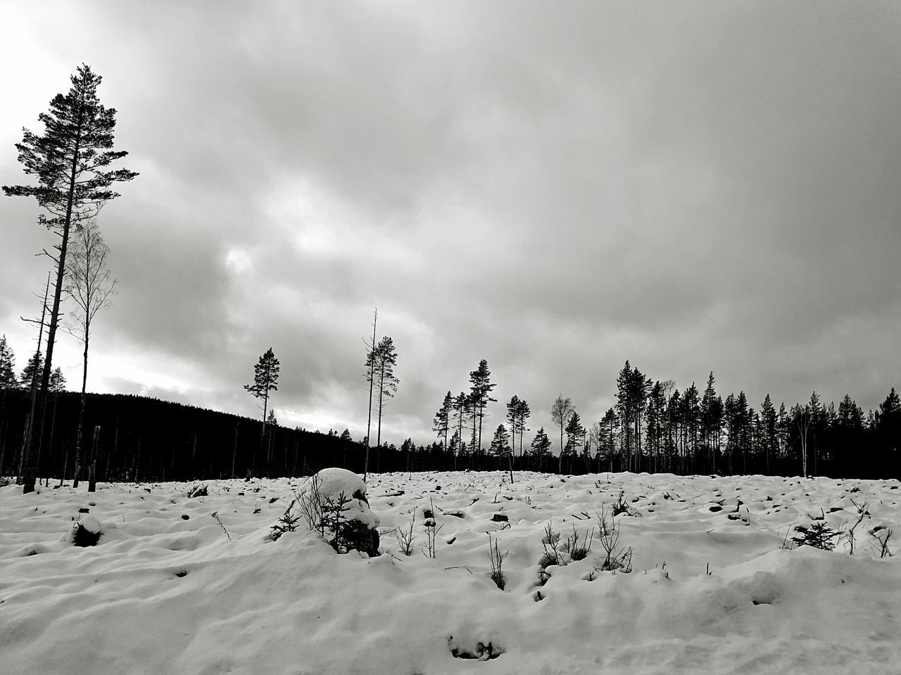 Landscape Landscape Landscape_Collection Landscape_photography Landscapes Winter Snow Growth Monochrome Black And White Cold Temperature Beauty In Nature Scenics Nature WoodLand Blackandwhite Dalarna The Great Outdoors - 2017 EyeEm Awards