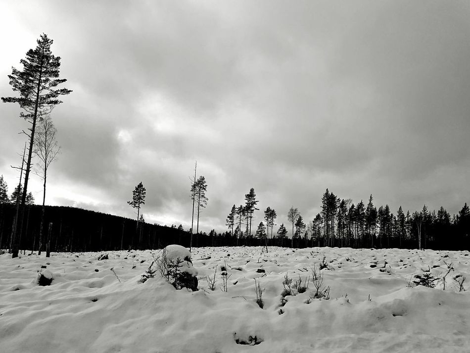Landscape Landscape Landscape_Collection Landscape_photography Landscapes Winter Snow Growth Monochrome Black And White Cold Temperature Beauty In Nature Scenics Nature WoodLand Blackandwhite Dalarna