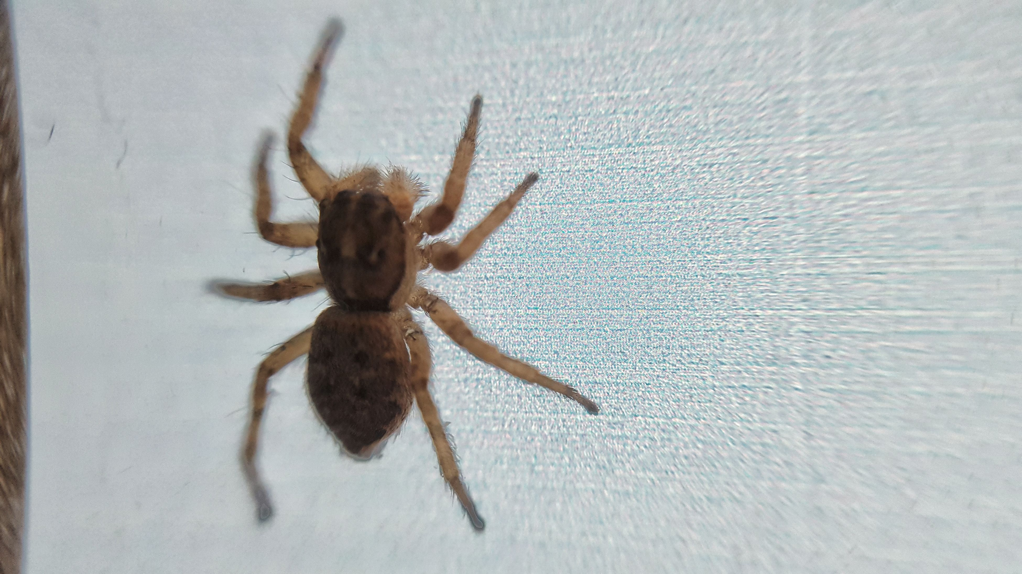spider, one animal, animal themes, animals in the wild, animal wildlife, no people, day, close-up, animal leg, nature, indoors