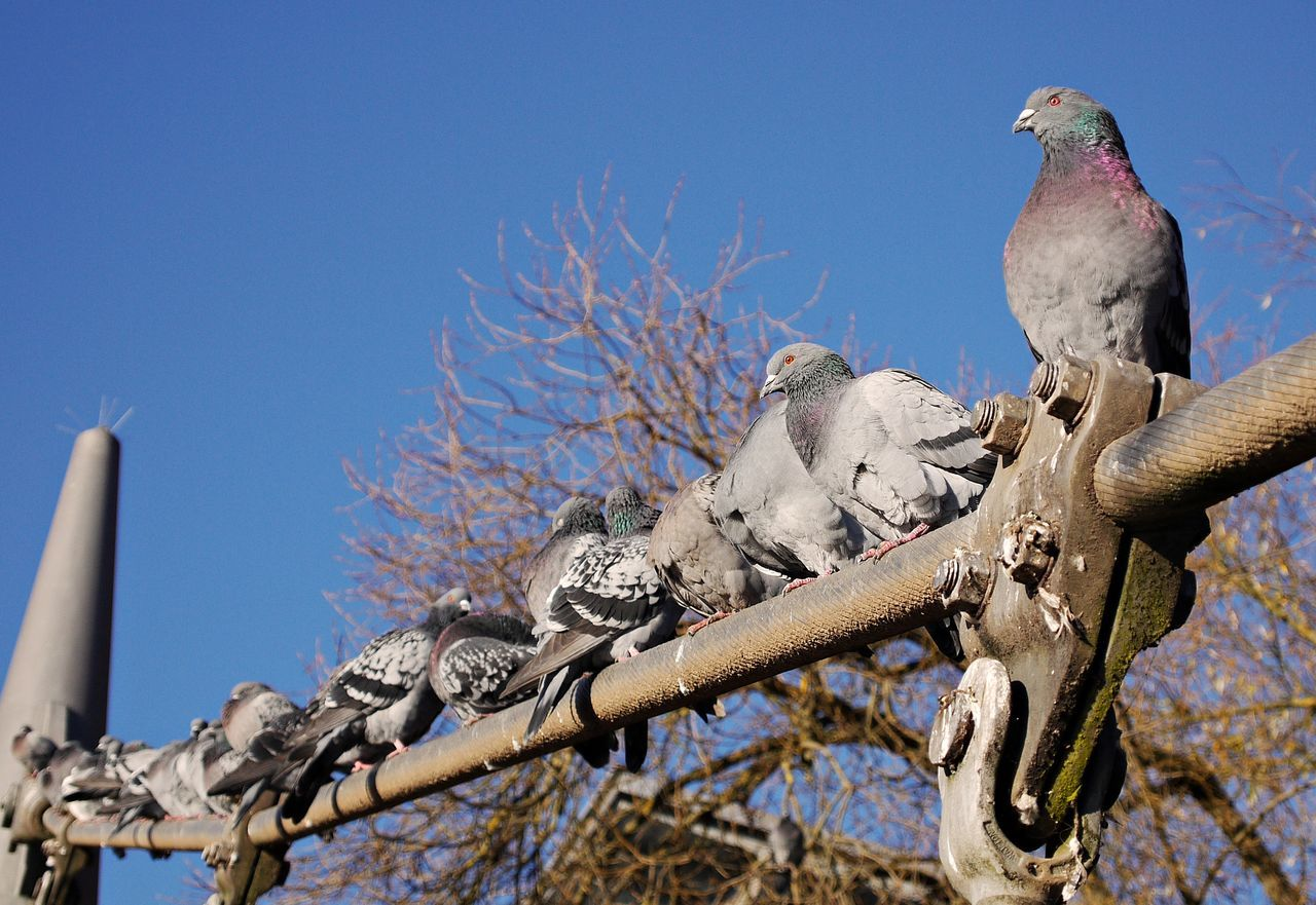 Animal Themes Animal Wildlife Animals In The Wild Autumn Bird Blue Branch Clear Sky Day Low Angle View Nature No People Outdoors Perching Pigeons Pigeonslife Siesta Time Sky Steelcable Tree