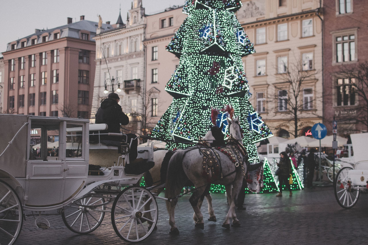 Like a tourist in my hometown. Sweet visit :] Adults Only Animal Themes Building Exterior Built Structure Carriage Christmas Christmas Tree City Cracow Holiday Horse Horse Cart Horsedrawn Main Square Malopolska Mode Of Transport Old Town Tradition Transportation Traveling Home For The Holidays Working Animal