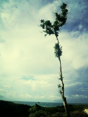peacefully TreePorn Naturelovers Life Is A Beach Starting A Trip @Biak Papua Indonesia