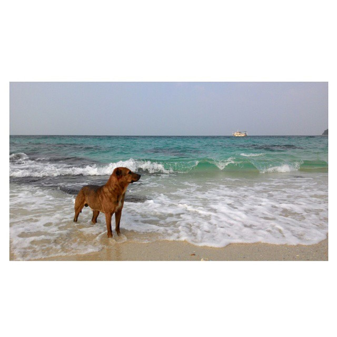 sea, horizon over water, beach, water, dog, animal themes, one animal, shore, nature, domestic animals, beauty in nature, scenics, clear sky, sand, pets, copy space, outdoors, sky, motion, mammal, day, wave, no people, full length
