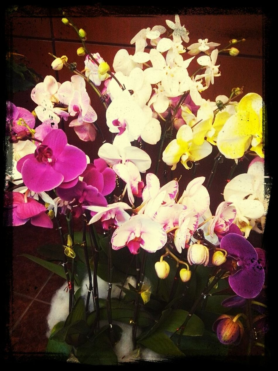Orchidy Spring Beautieries Lunareries