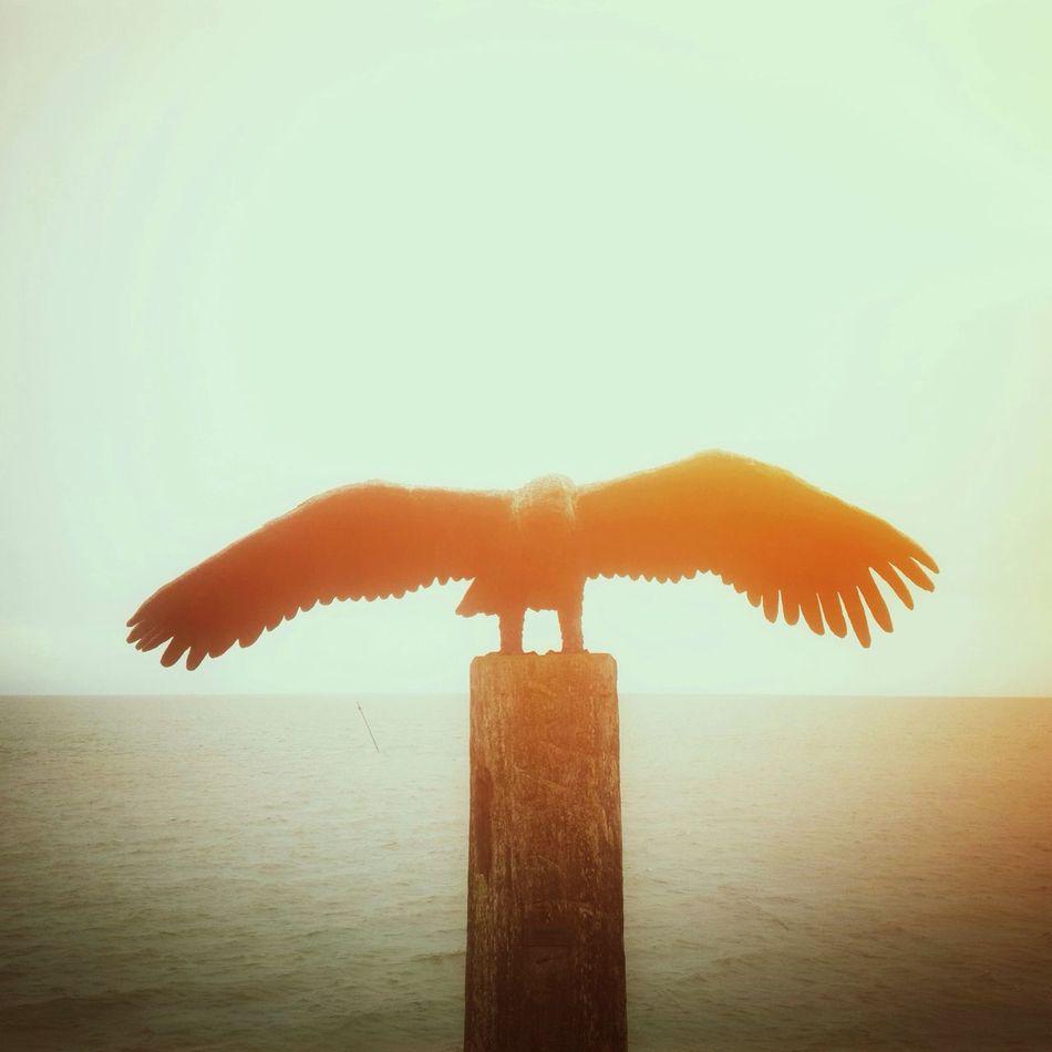Beautiful stock photos of wings, Animal, Bird, Clear Sky, Contrasts