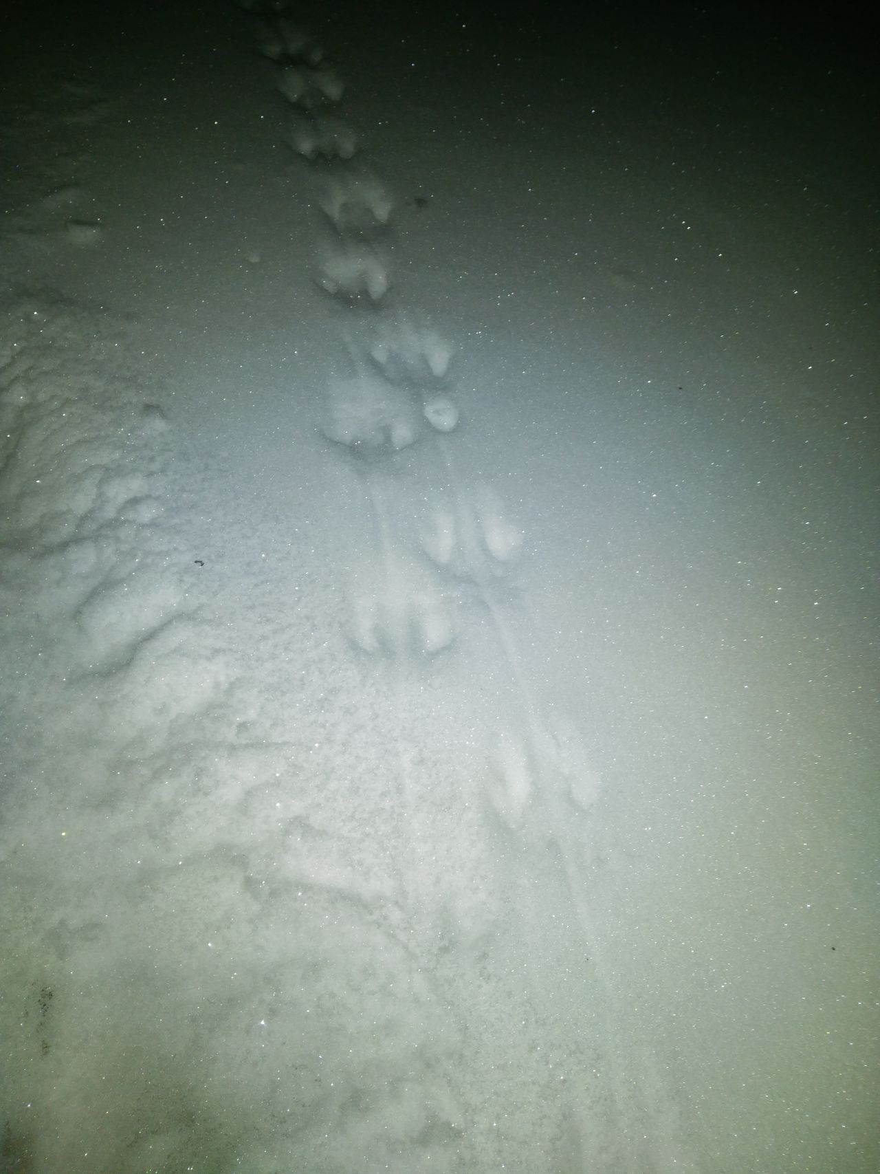 Reconnaissance Mission Snow ❄ Snow Lol Little Foot Prints Mouse Or Chipmunk Morningview No Filter, No Edit, Just Photography No Crop Photography Is My Escape From Reality!