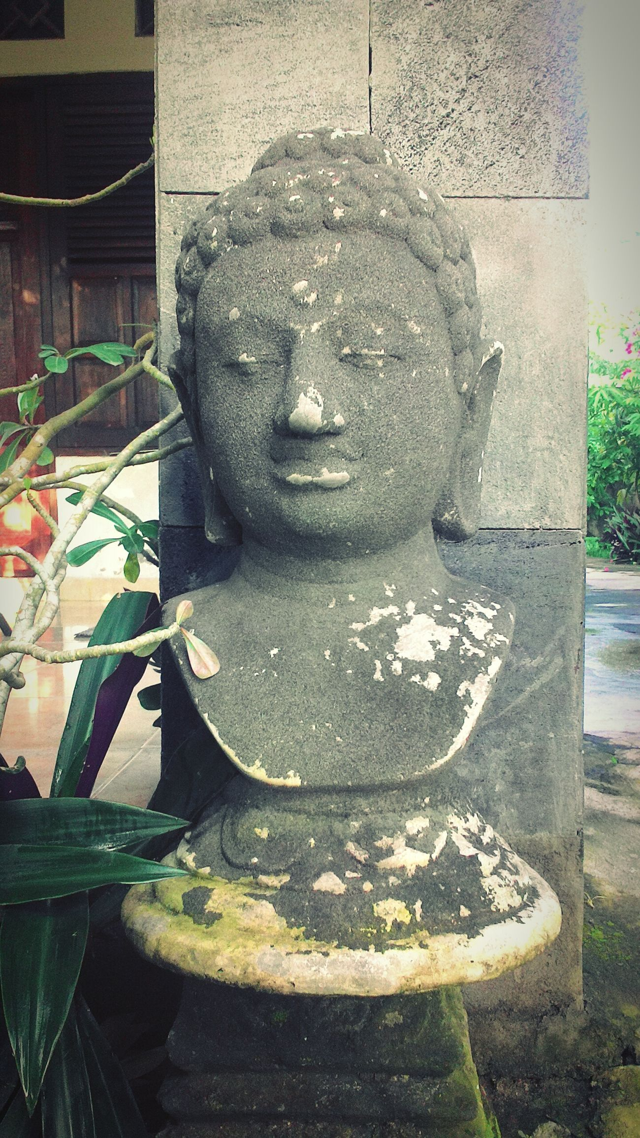 Buddha Head@my home morning never lie