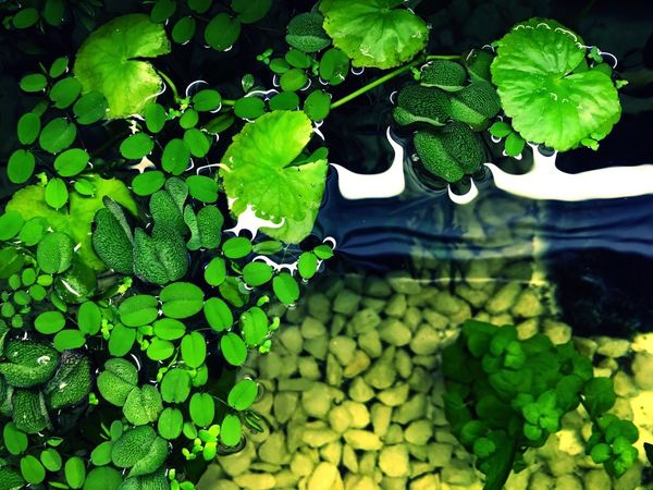 Leaf Green Color Growth Plant Nature Freshness Day Beauty In Nature Outdoors Close-up Water No People Fragility