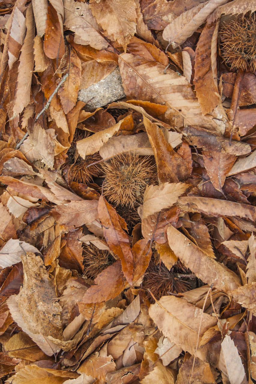 dry, leaf, autumn, nature, fragility, no people, backgrounds, change, dead plant, large group of objects, day, full frame, outdoors, dried plant, close-up, flower head, freshness