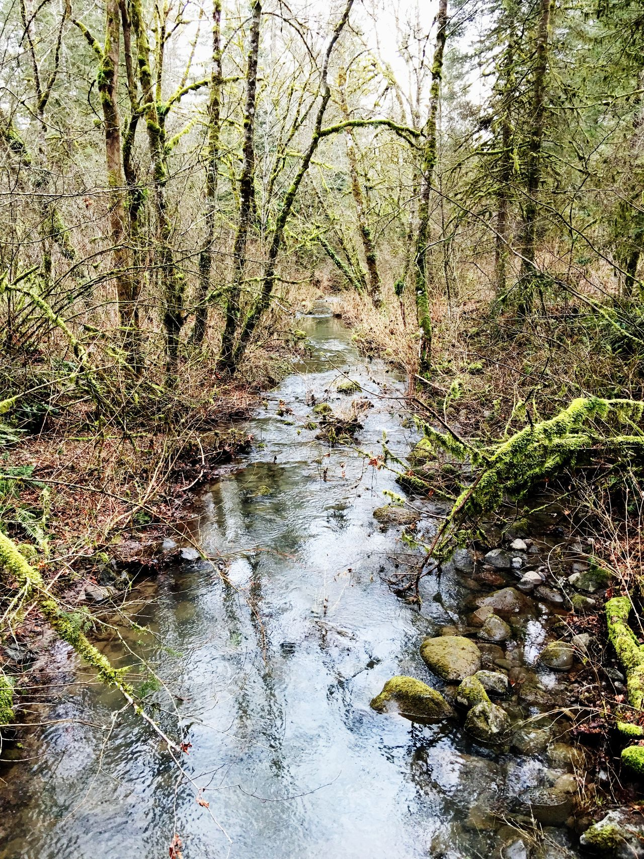 Nature Water Tranquility Tranquil Scene Tree Scenics Non-urban Scene Beauty In Nature Outdoors Day No People Growth Forest Grass Stream - Flowing Water Path In Nature Pathways Outdoor Pictures Nature_collection Nature Photography Trees And Nature Tranquility Nature Meaning Of Life Creekside Trail