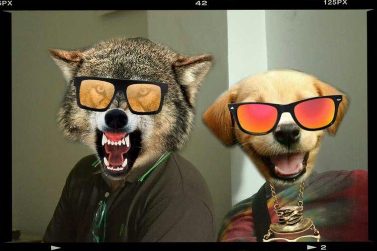 Dogmadness Zupps