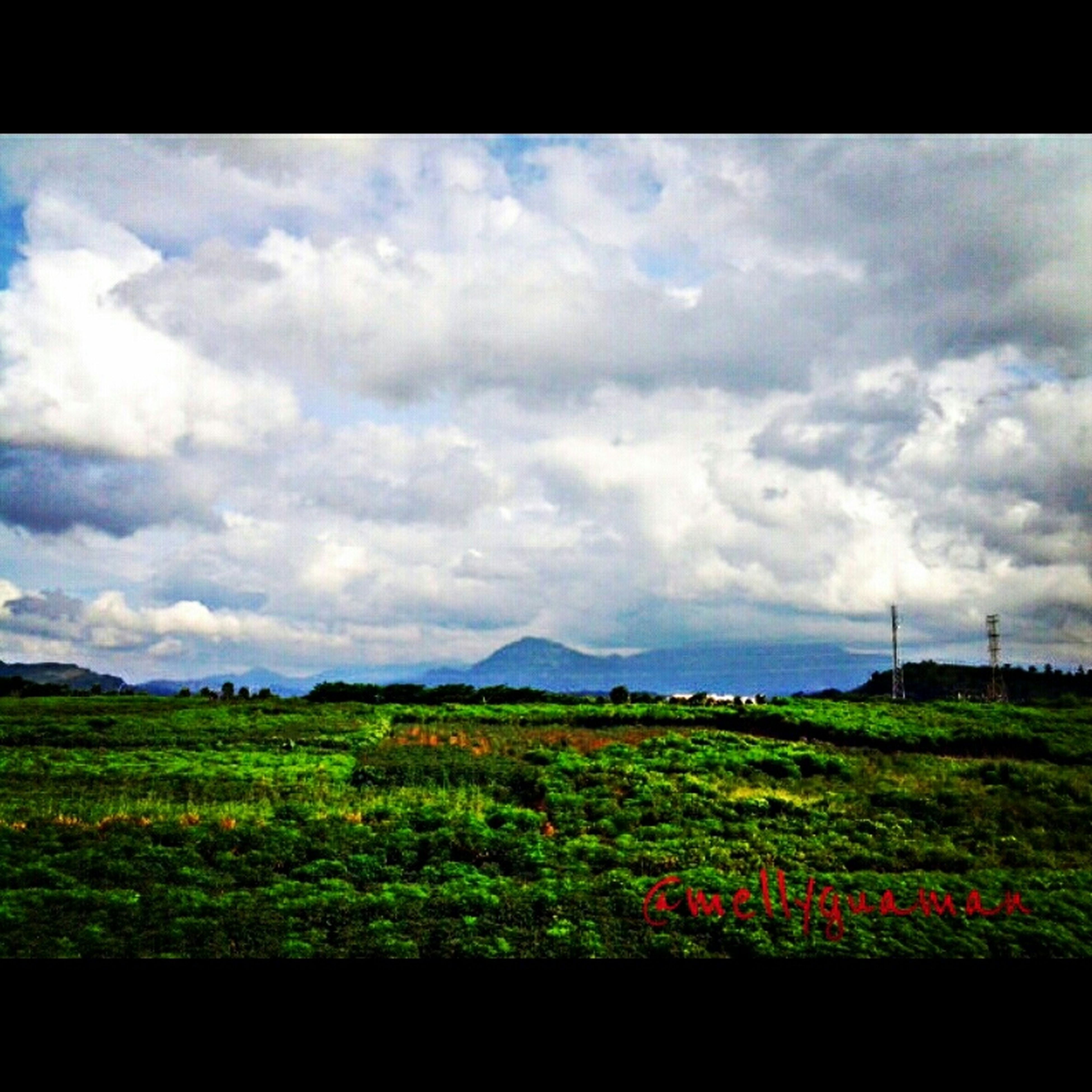 landscape, sky, field, tranquil scene, transfer print, cloud - sky, tranquility, scenics, beauty in nature, cloudy, rural scene, grass, nature, cloud, agriculture, green color, auto post production filter, horizon over land, growth, farm