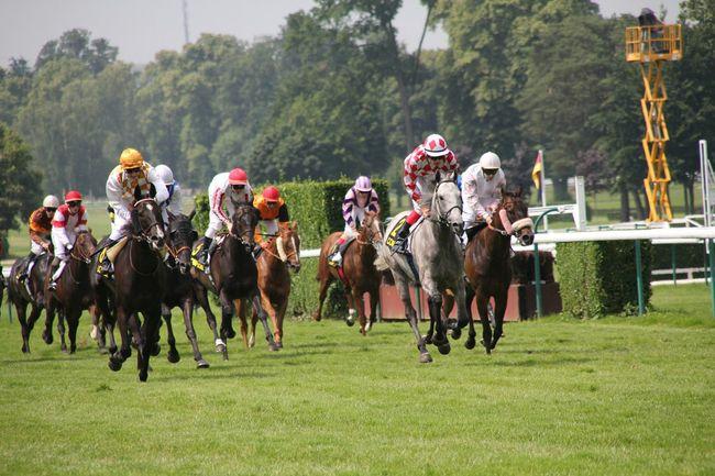 cheval Horse Cheval Course Race Hippodrome Jockey