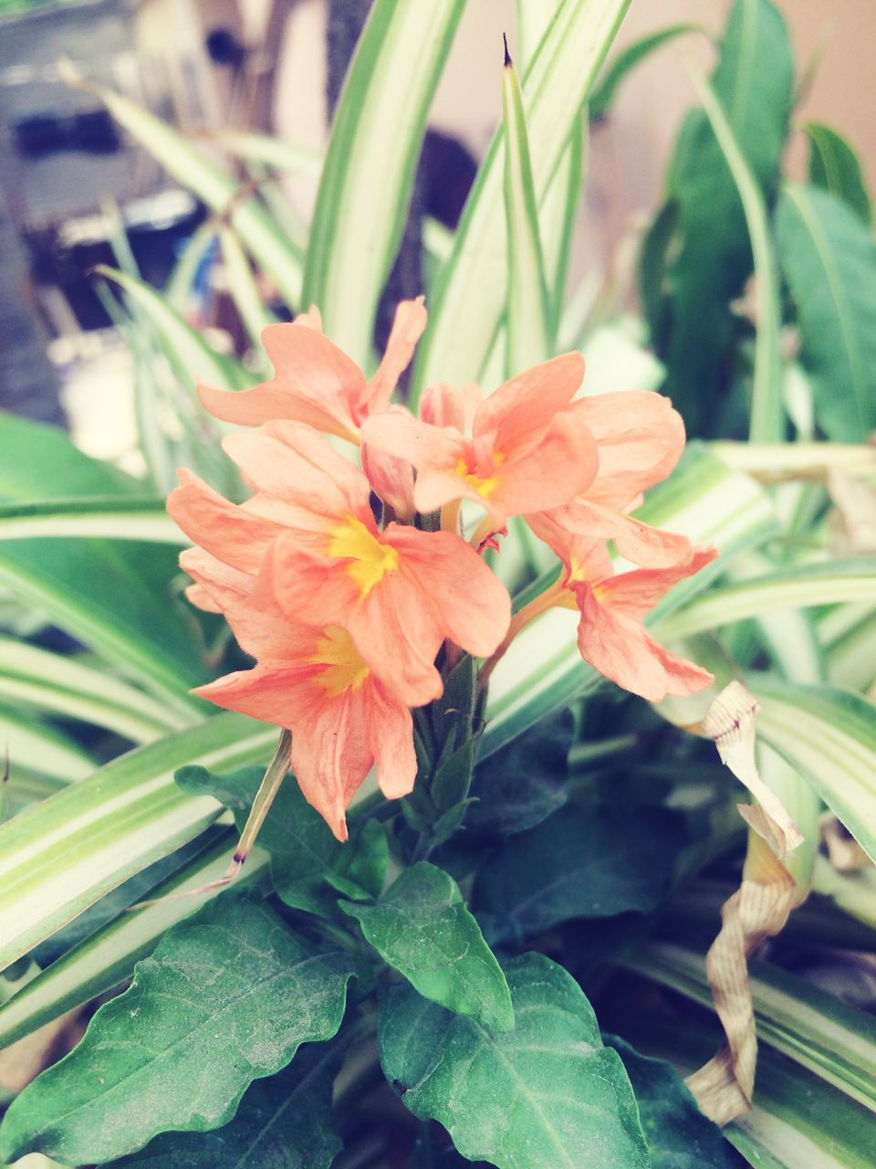 flower, growth, plant, leaf, nature, beauty in nature, green color, fragility, freshness, petal, flower head, no people, close-up, outdoors, day