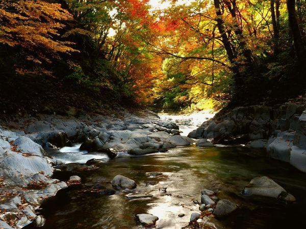 Nakatsugawa Valley Autumn Leaves Autumn Leaves Is A Great Beauty In Nature Leaf Peeping Autumn Bloom Great Japanese Landscape Urabandai District Fukusima,japan Autumn