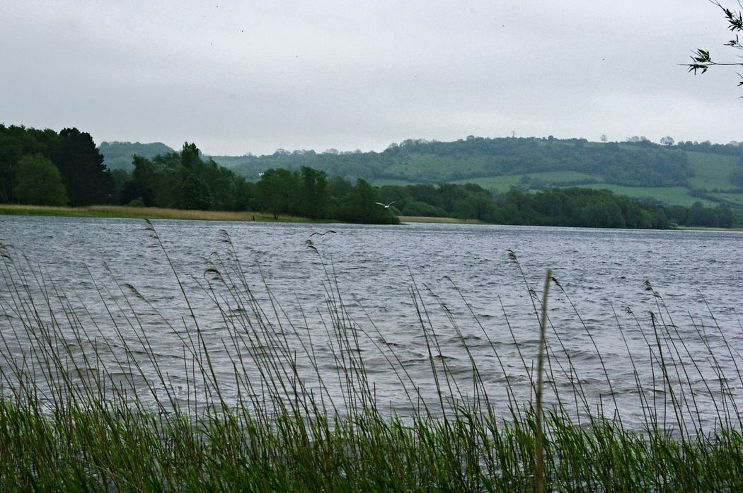 Yeah Springtime! Nature On Your Doorstep Walking Around The Lakes Landscape Nature Chewvalleylake Relaxing Taking Photos