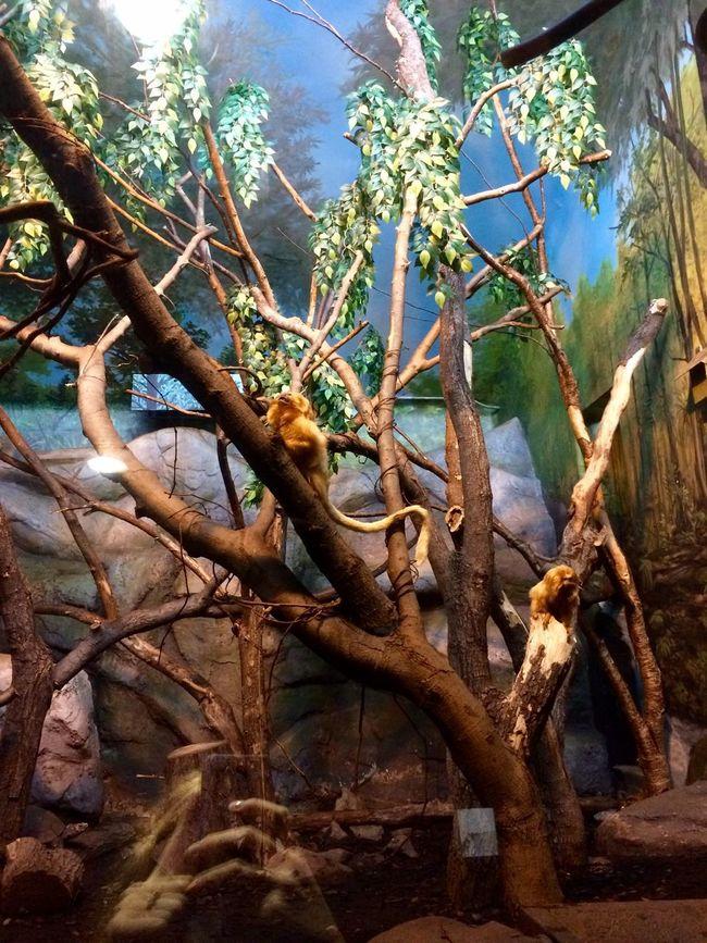 Hello there Monkeys Tree Beauty In Nature Monkey Monkey Family