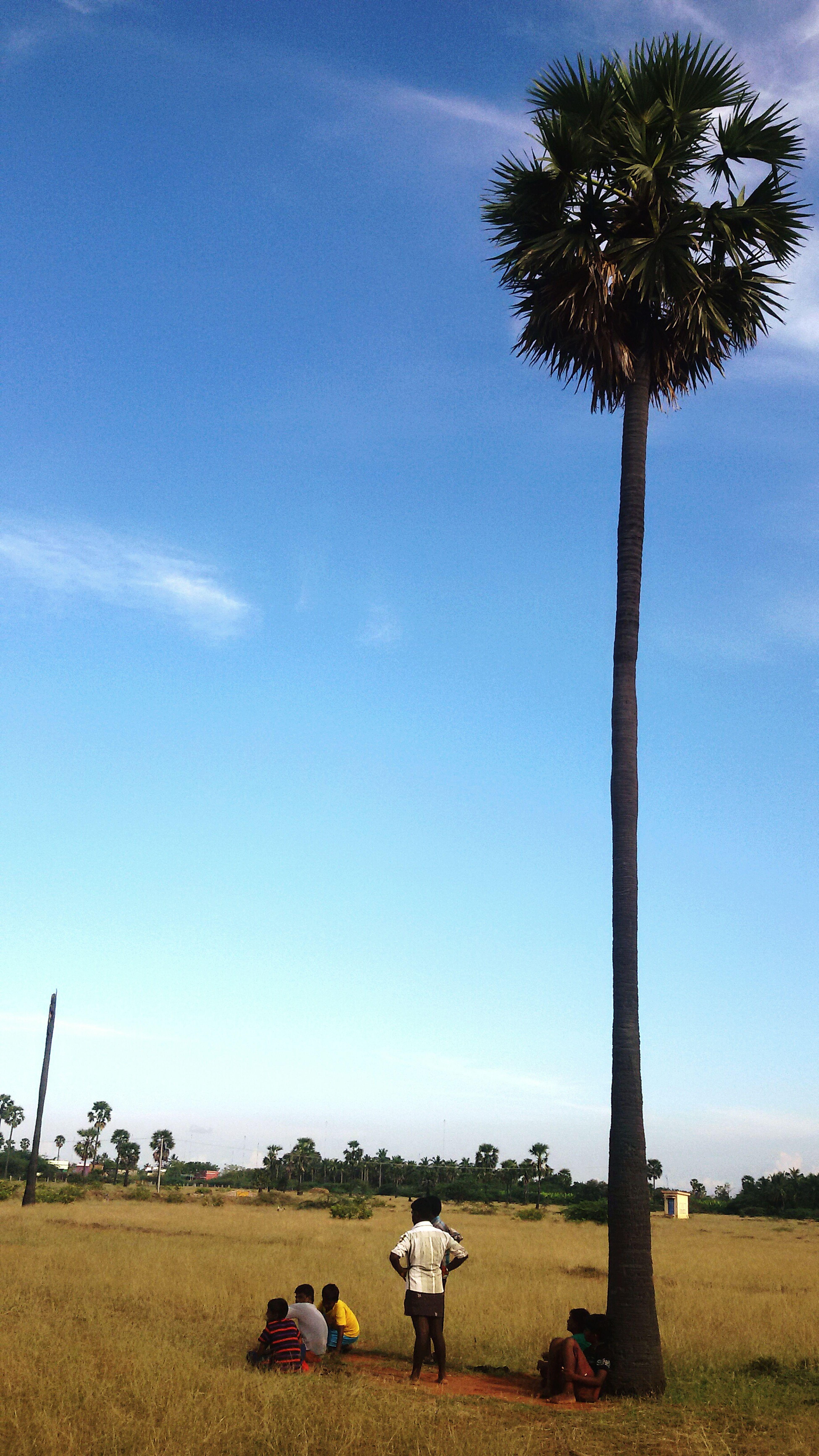 Palm Tree He'ght Vs Human He'ght 👸👑💄💎💋 Tree And Sky Tree And Human Palm Tree Village Height
