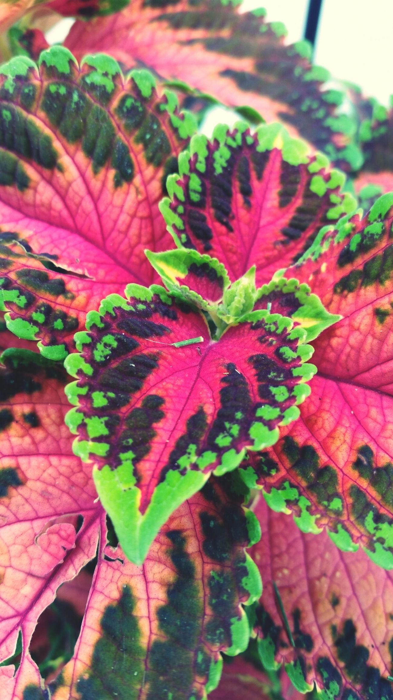 SummerPlant Summerflower Colorful GalaxyS5