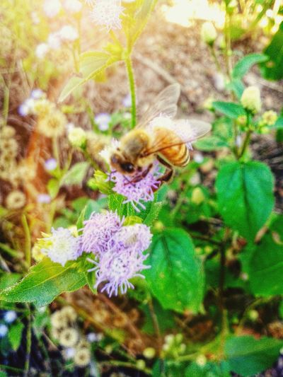 Bee : )