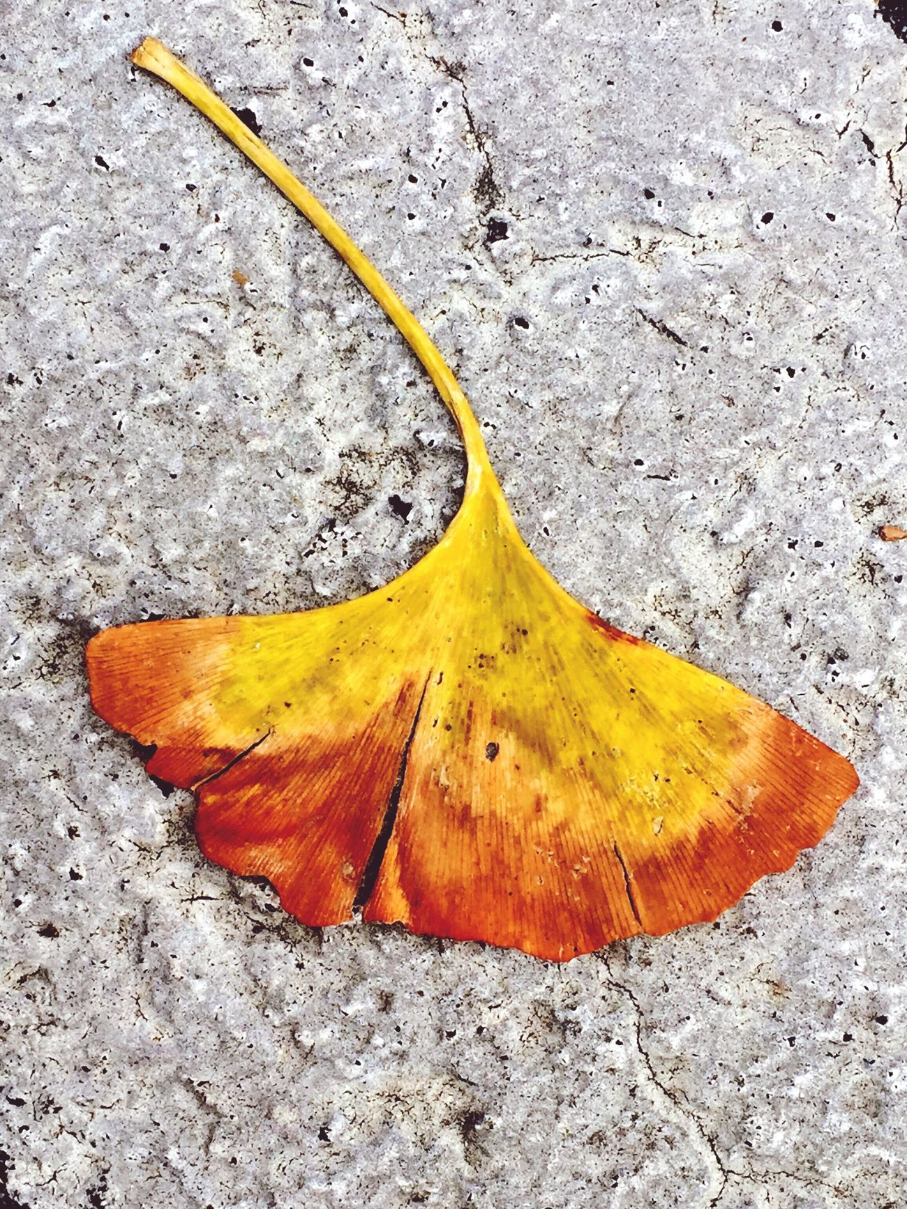 Sometimes Things Just Find You Like This Leaf in the parking lot. Autumn Minimalism Simplicity Nature