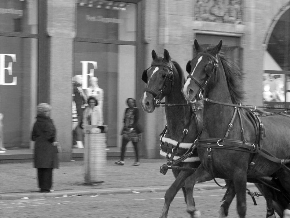 Amsterdam Black And White Blackandwhite City Horses Streetphotography Working Working Hard Animals Eyemphotography Kutschfahrt