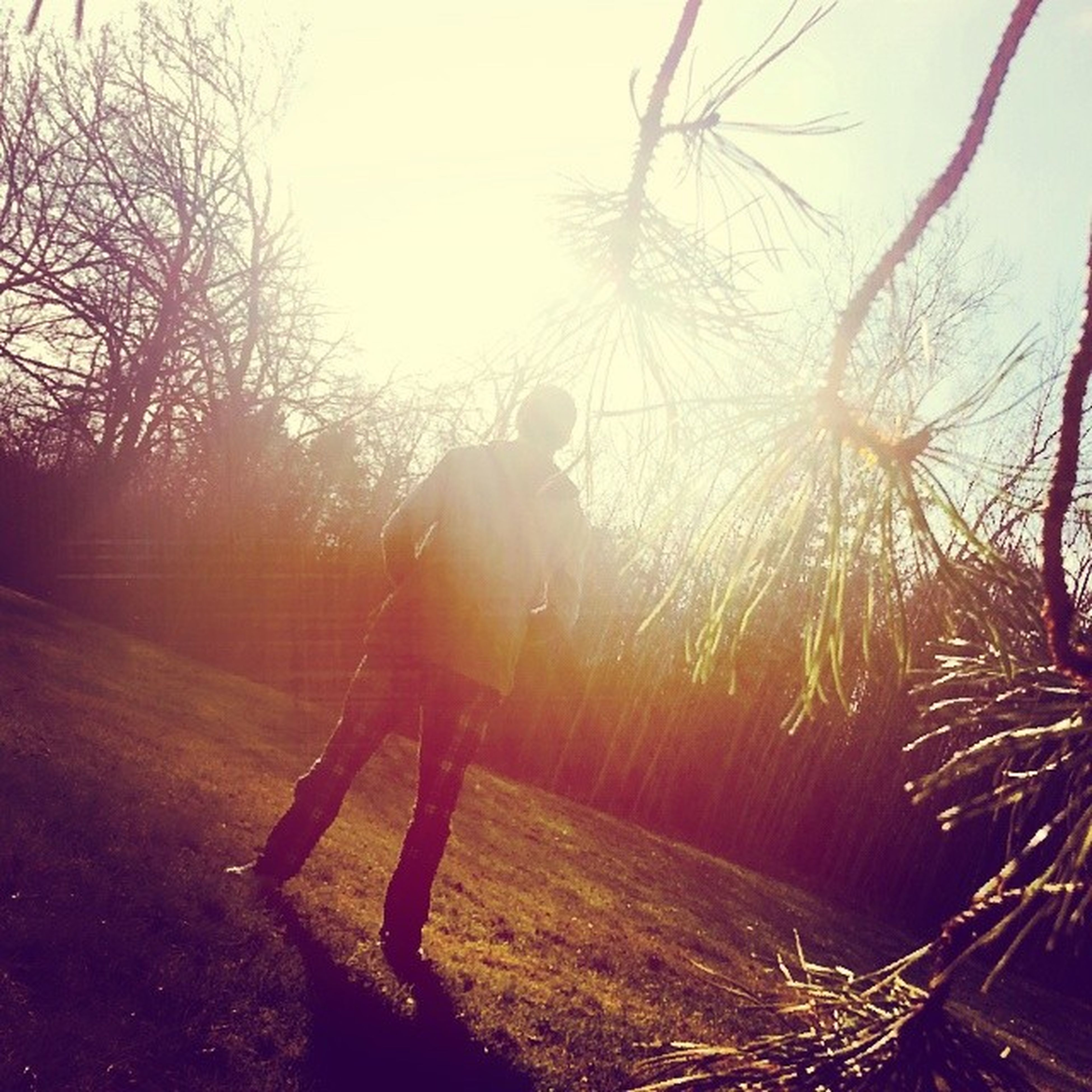lifestyles, leisure activity, field, grass, sunbeam, sun, tree, sunlight, standing, full length, lens flare, rear view, nature, landscape, outdoors, person, plant, walking