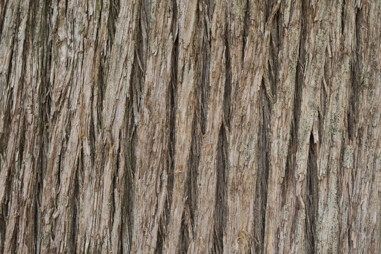 Close up texture of Cypress tree bark Bark Cypress Natural Nature Rustic Tree Weathered Wood Abstract Aged Backgrounds Branch Close-up Cracked Detail Fir Forest Grunge Hardwood Park Pattern Redwood Texture Timber Wooden