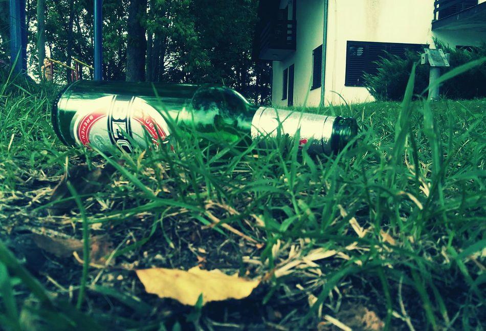 Becks, Beer, Summer