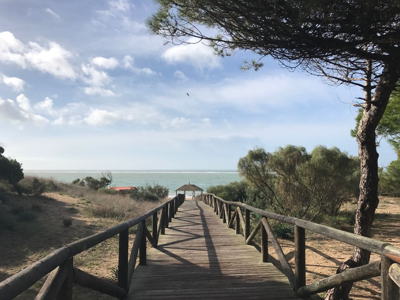 Tree Sky Nature The Way Forward Railing Day Boardwalk Tranquil Scene Landscape Beauty In Nature Tranquility Outdoors Scenics No People Water