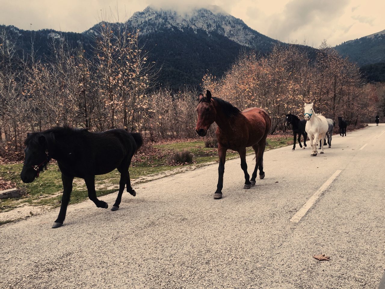 Taking Photos Nature Traveling Enjoying Life Greece Playing With The Animals Happiness Horse I Love Horses