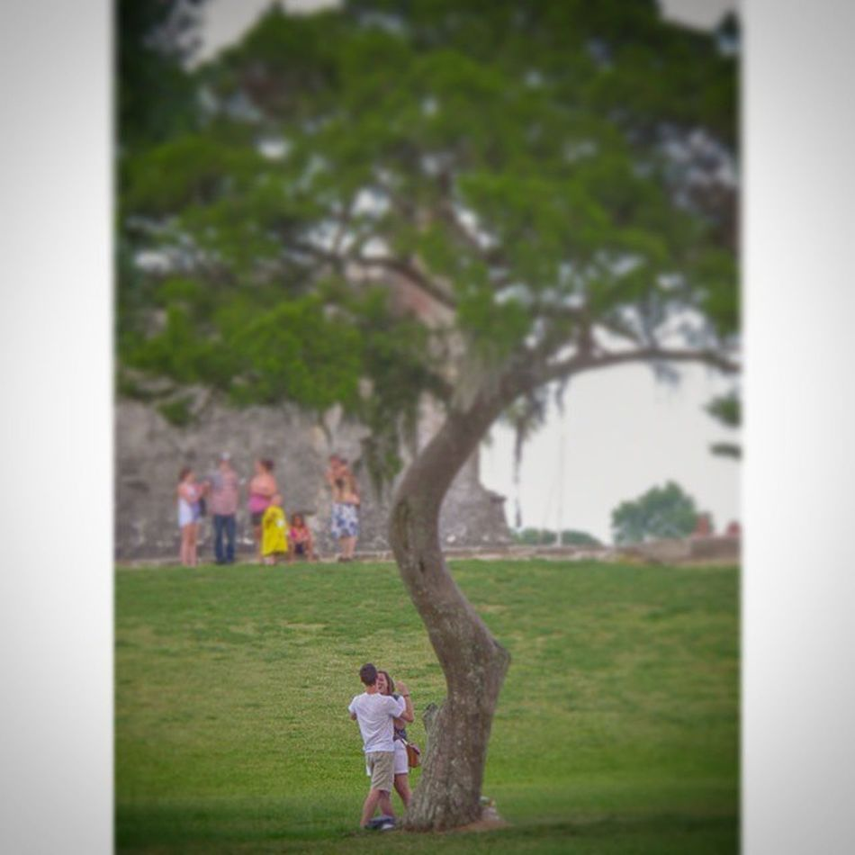 "The Moment after Theproposal by ""the tree"" in front of traffic at the Castillodesanmarcos Couples Love Trafficshot Staugustine Florida Ig_great_shots_fla"