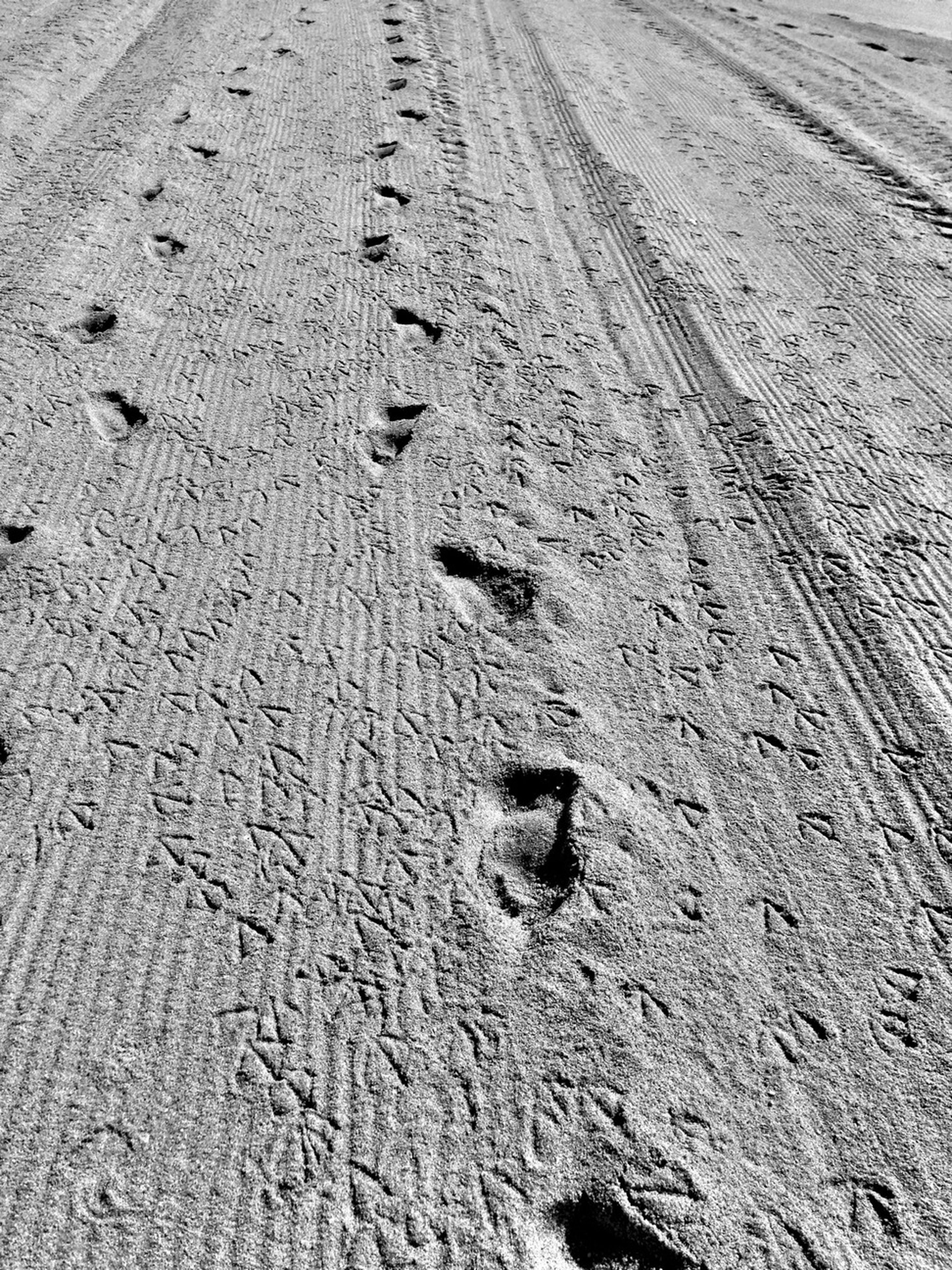 footprint, sand, the way forward, high angle view, road, tire track, asphalt, nature, street, diminishing perspective, tranquility, surface level, day, sunlight, beach, outdoors, snow, vanishing point, transportation, no people