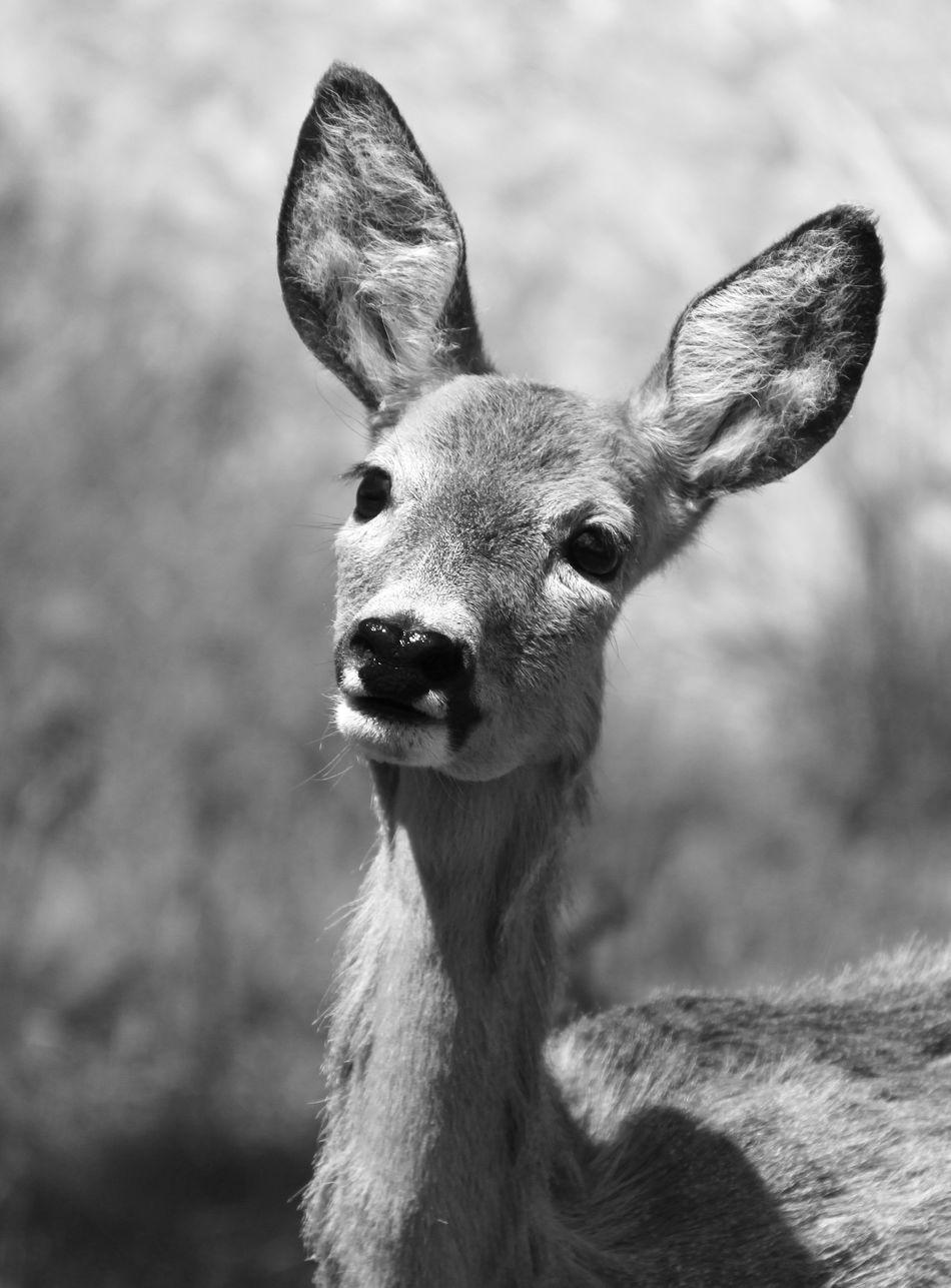 Beautiful stock photos of hirsch, Animal Ear, Animal Head, Animal Themes, Animal Wildlife