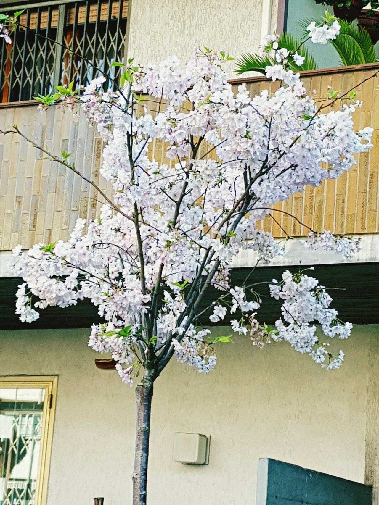Beauty In Nature Nature Cita Giorno Fiori Tranquil Scene Calma Albero In Fiore