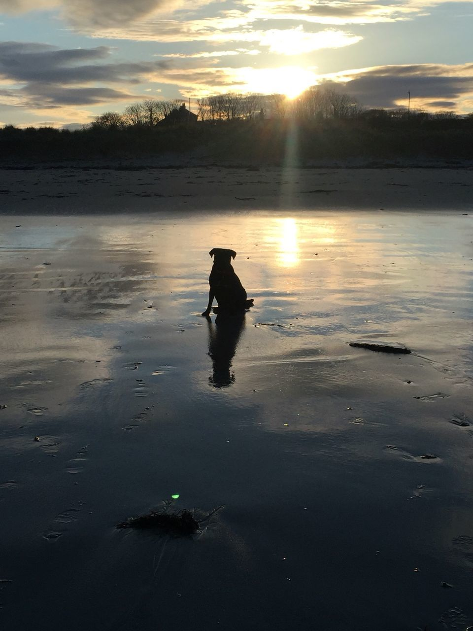 sunset, reflection, nature, silhouette, one animal, water, animal themes, lake, sunlight, outdoors, beauty in nature, sky, cloud - sky, animals in the wild, no people, scenics, bird, day, mammal