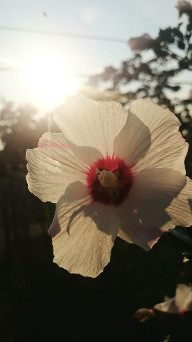 Sony Z2 Photography Human Meets Technology Nature Toronto Flower Sunshine Makes Everything Better