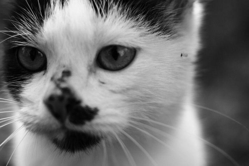 Cat One Animal Animal Themes BW