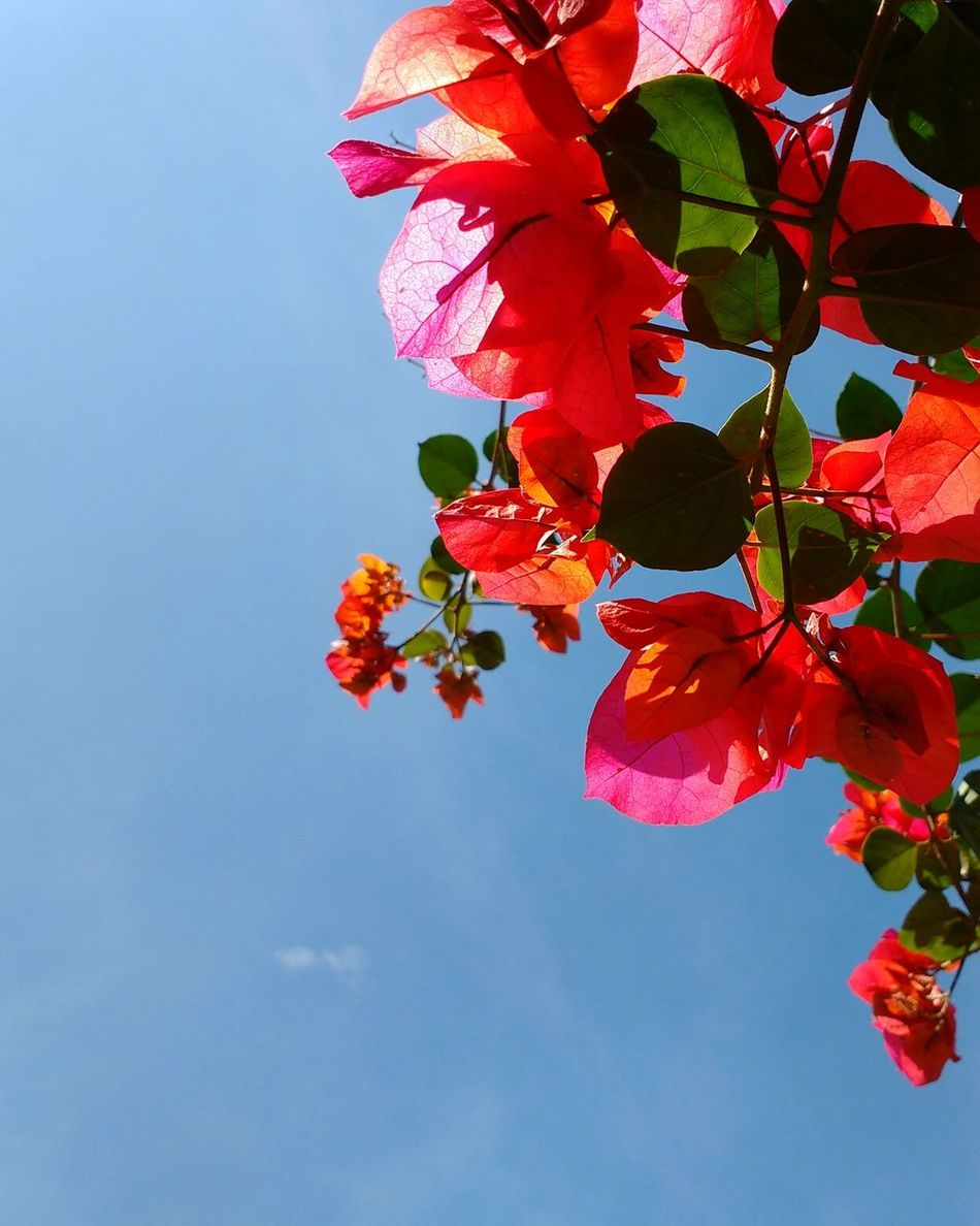 Flowers Sky Beauty In Nature Nature Red Plant Colors Light Morning Light Day