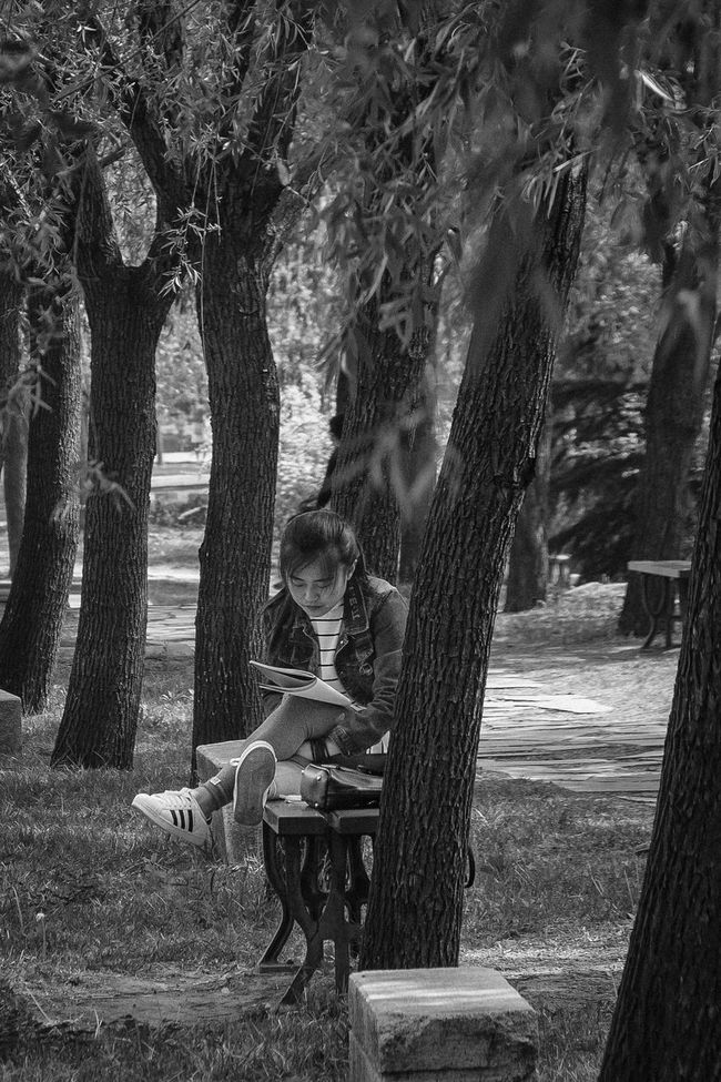 Reading under the trees Day Outdoors Park - Man Made Space Reading Relaxation Tree Treelined Young Women