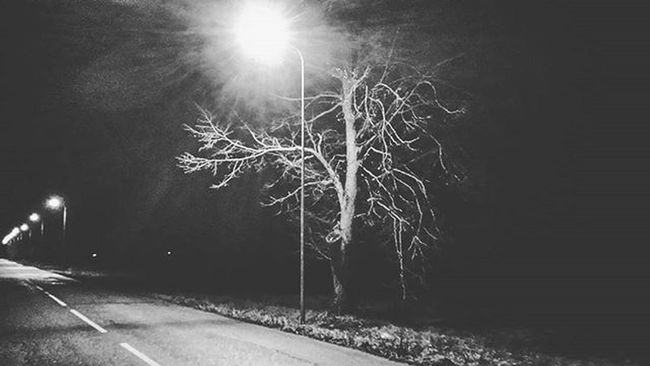 But In This At Least Thou Shalt Not Defy My Will - To Rule My Own End Tree Dark Night Latern Light Road Home Goinghome Latvia Dundaga Black Grey Quote Jrrtolkien LOTR TheHobbit Magical Majestic End Beginning Mywill Own Inspiring Picture Joy happiness