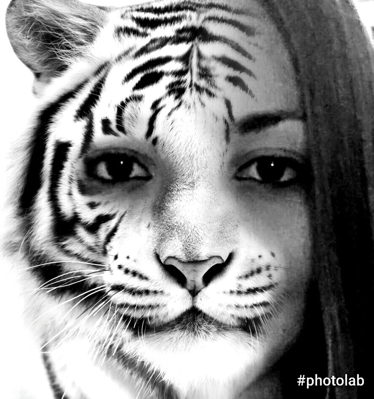Me Montage Photography Tiger Blackandwhite Portrait Photolab Looking At Camera