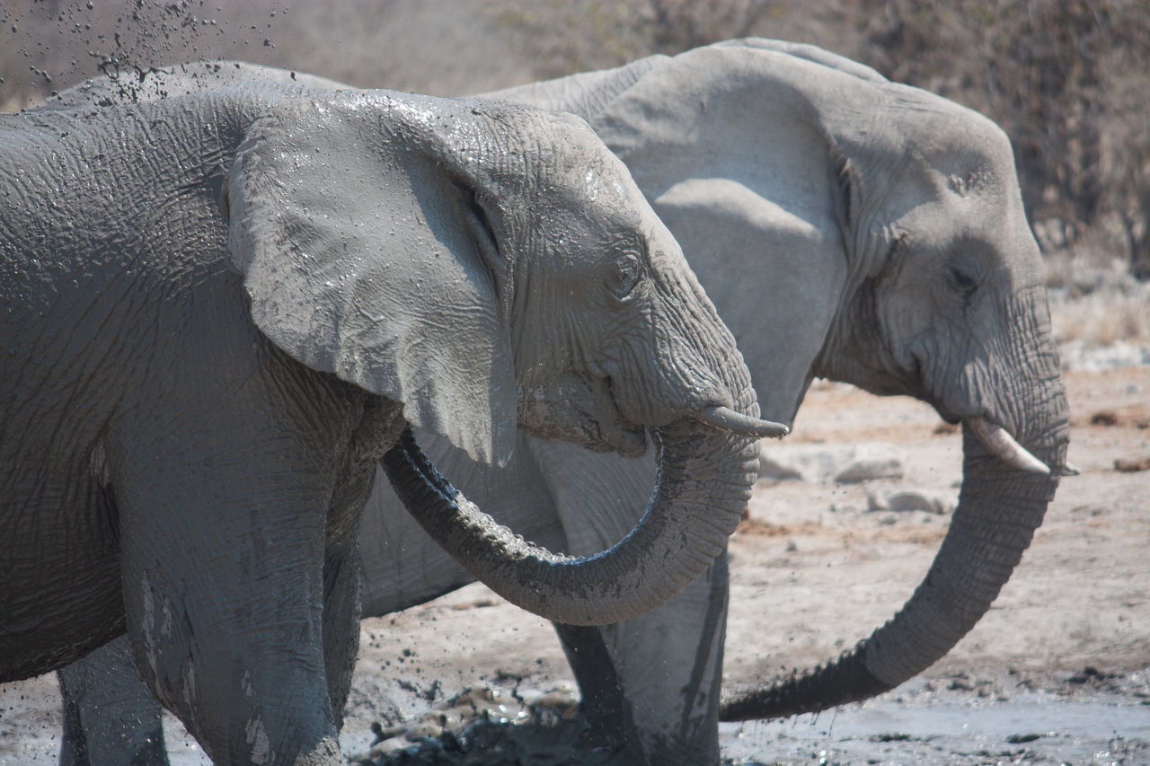 Beautiful stock photos of elephant, Animal Head, Animal Themes, Animals In The Wild, Day