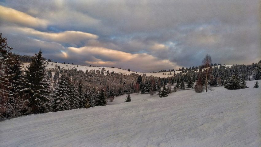 Snow Cold Temperature Winter Cloud - Sky Sky Outdoors Nature Animal Themes Large Group Of Animals Day People Beauty In Nature Fir Tree Sunset And Clouds  Mountain Landscape Winter White Color Snow Covered Winter Day Skiing ❄ Ski Slope Romania