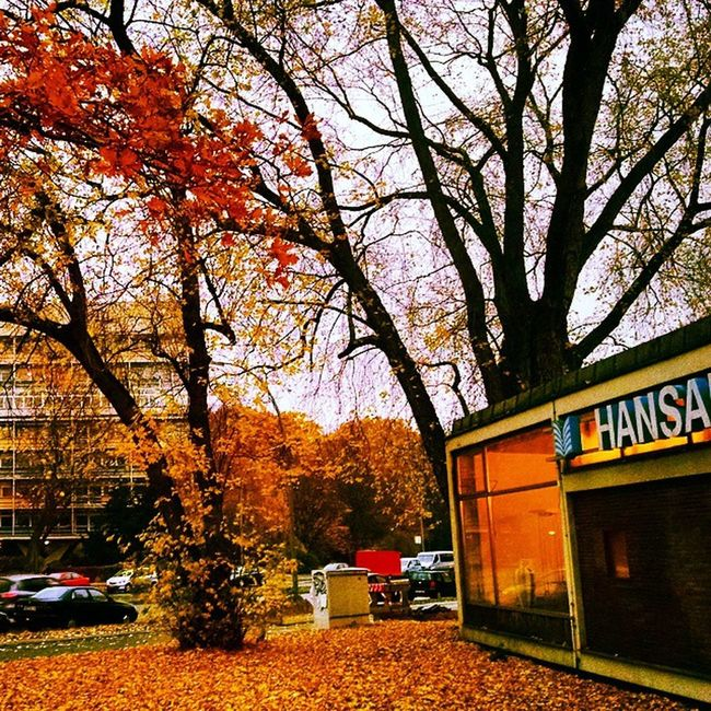 Autumn Colors Berlin Deutschland Germany Ig_deutschland Ig_germany Ig_europe Insta_international Insta_europe Hansa Home Mitte