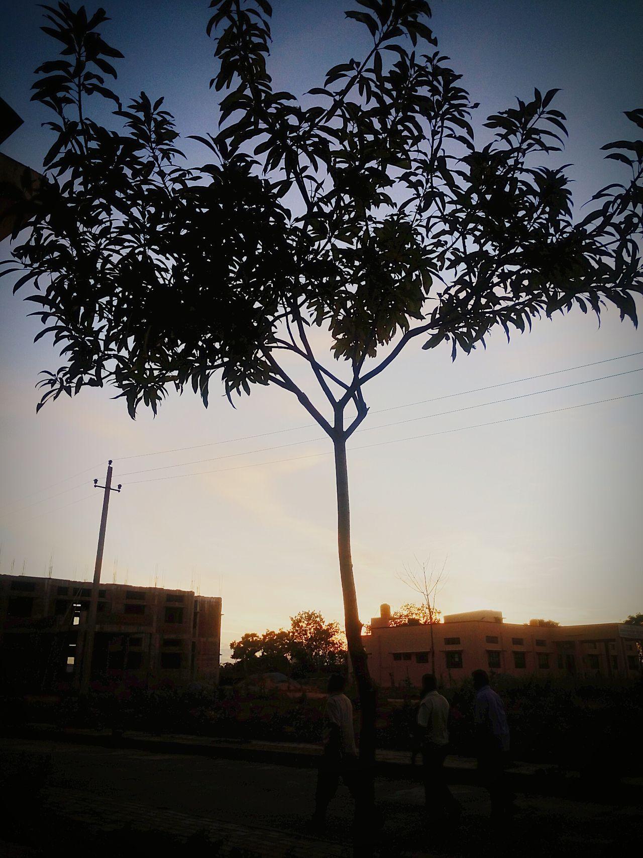 Tree Tall - High Calm Sky Low Angle View Sunset
