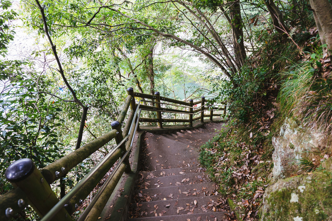 The unknown path 1 Beauty In Nature Day Growth Nature No People Outdoors Railing Staircase Steps Steps And Staircases Tree