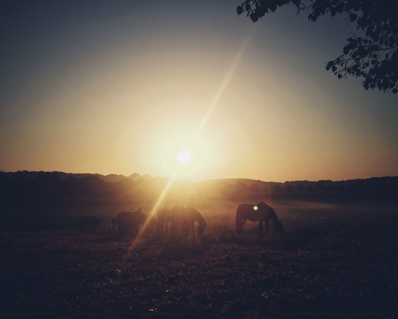 sun, sunset, sunbeam, sunlight, lens flare, nature, silhouette, domestic animals, beauty in nature, field, landscape, real people, togetherness, outdoors, mammal, sky, men, clear sky, scenics, friendship, day, people