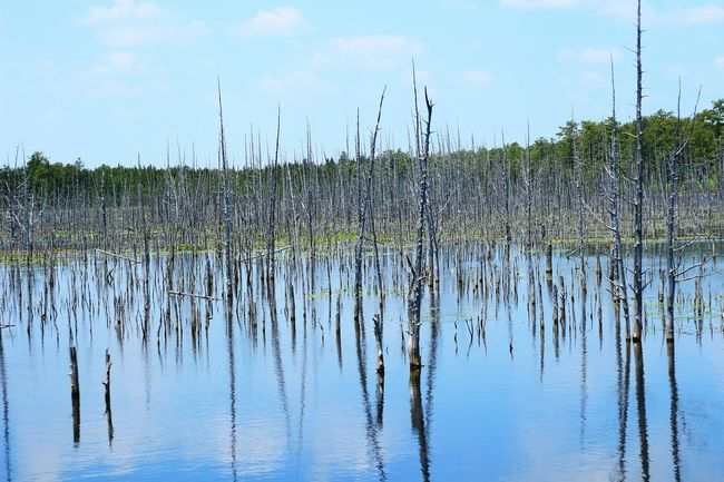 Reflections In The Water Swamp Deadwood