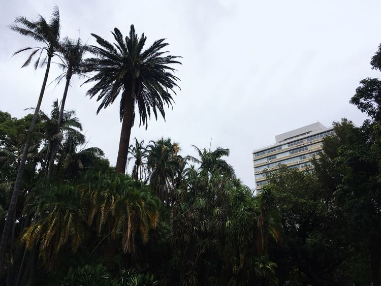 Mother City Big City Life Skyscraper Palm Low Angle Low Angle View Capetown From Below Summer Rain Summer Rainy Day Rainy Days Palm Tree Heritage Colonial Heritage Colonial Company Garden Companygardens Cape Town Capetown South Africa Capetown Palm Tree Tree Low Angle View Growth Sky No People Nature Outdoors Day Beauty In Nature
